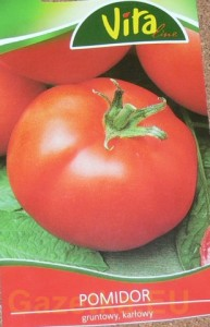 pomidor st-pierre
